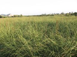 Rinaturalizzazione e fitodepurazione lago massaciuccoli